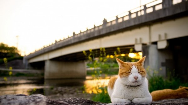 cat-under-bridge-desktop-background.jpg