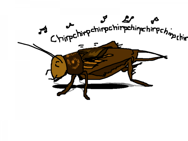 FieldCricket.png